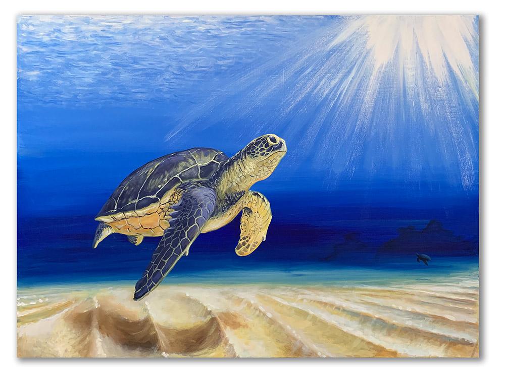 3.-Turtle_sm